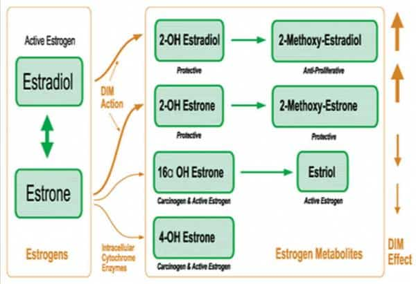 Estrogen metabolism and estrogen dominance