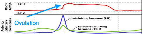 Ovulation and basal body temperature