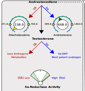 Testosterone metabolism