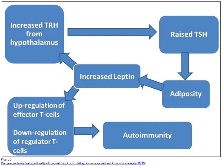 hypothyroidism weight gain and leptin resistance