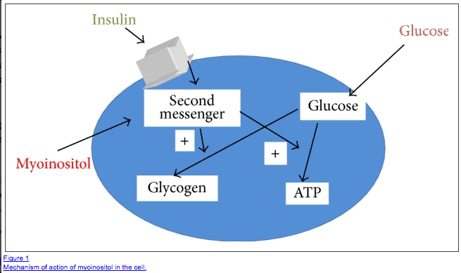 How myoinositol alters glucose homeostasis