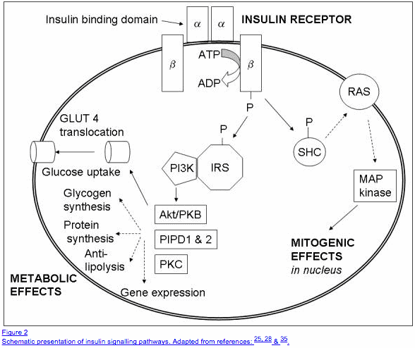 insulin resistance and weight gain