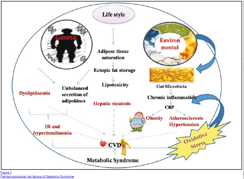 Connection between intesitnal dysbiosis and metabolic syndrome