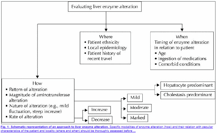 evaluation of elevated liver enzymes