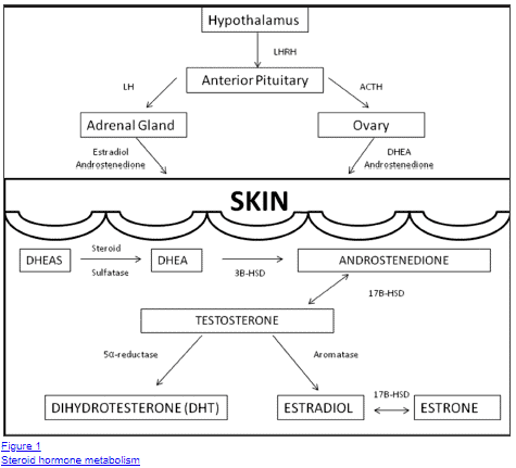 effect of hormones on the skin