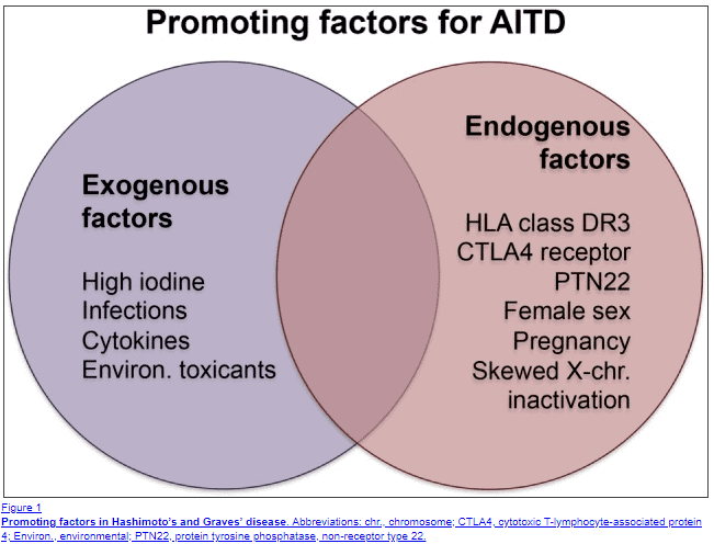 factors that promote the development of hashimotos thyroiditis