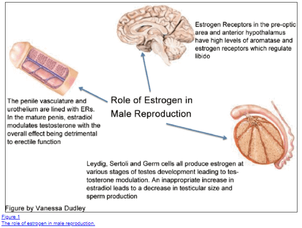 Common Symptoms Of High Estrogen in Men & What Causes it