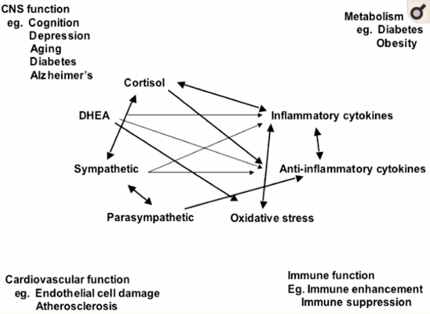mediators of stress in the body