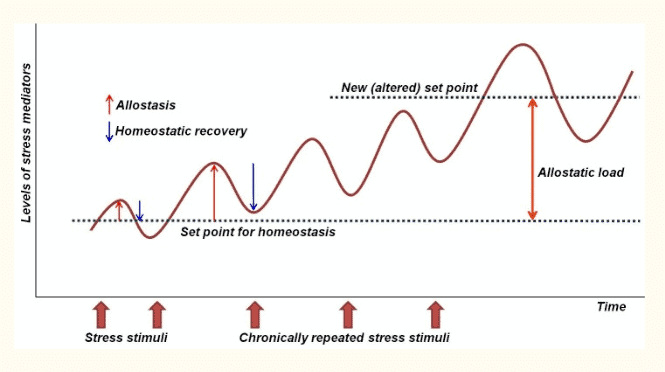 chronic stress and its impact on cortisol levels