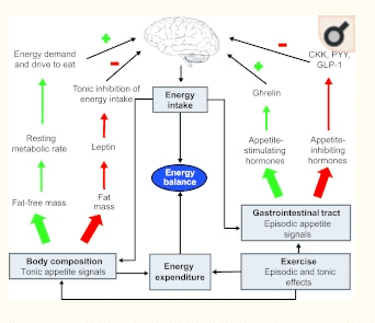 role of appetite on resting energy expenditure and metabolism