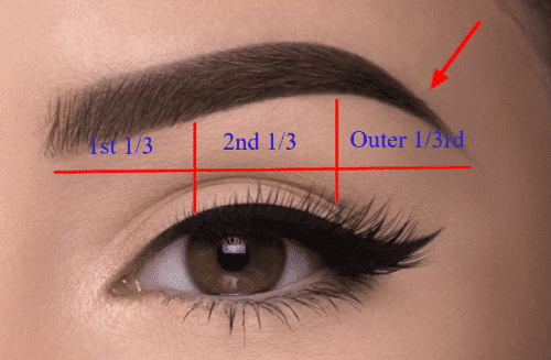 thyroid eyebrow hair loss occurs in the outer one third of the eyebrow